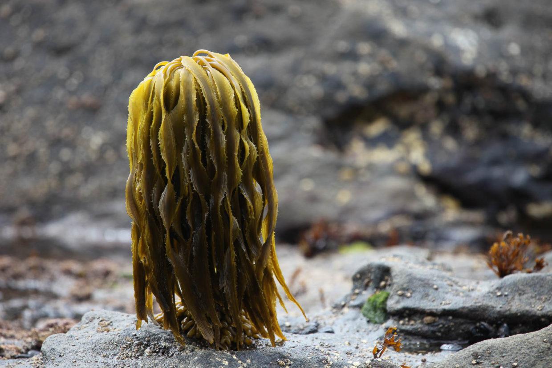 Seaweed Tree